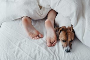 woman lays under covers with her dog
