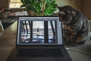 cat looks at laptop screen in home office setup