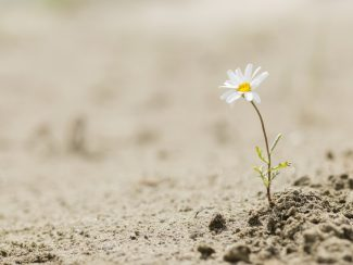 You Can Survive This: Cultivating Resilience for Hard Times